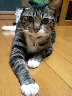 今日のポッチャン〜安全ピン