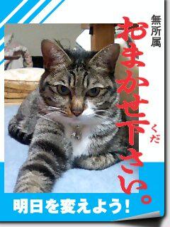 にゃんずニュース1/15号