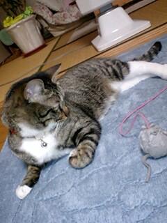 猫と空気清浄機(^_^;)