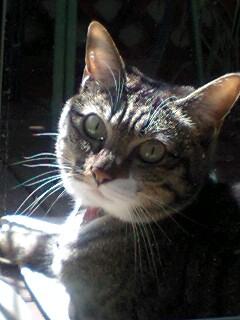 春を待つ猫