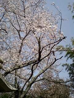 にゃんずニュース4/2号