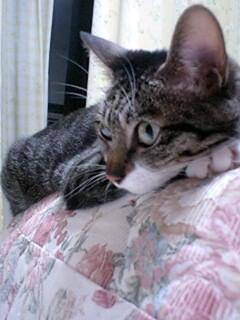 ソファーで爪とぎ